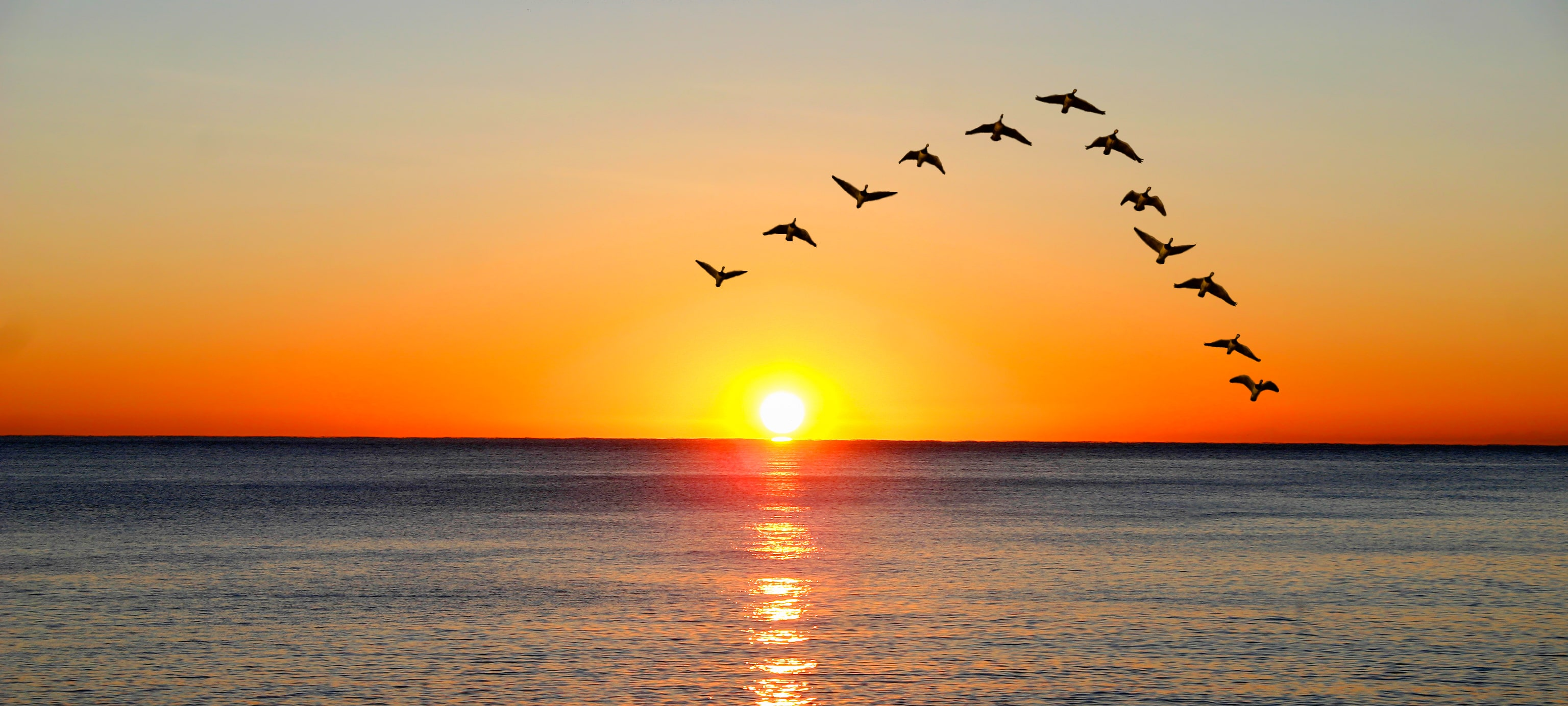 Red/yellow sun above seaside with birds flying in V formation